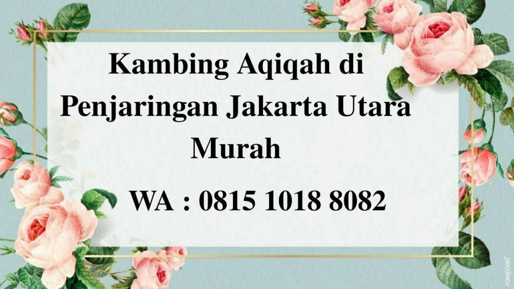 Kambing Aqiqah di Penjaringan Jakarta Utara