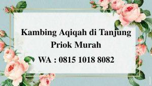 Kambing Aqiqah di Tanjung Priok Jakarta Utara