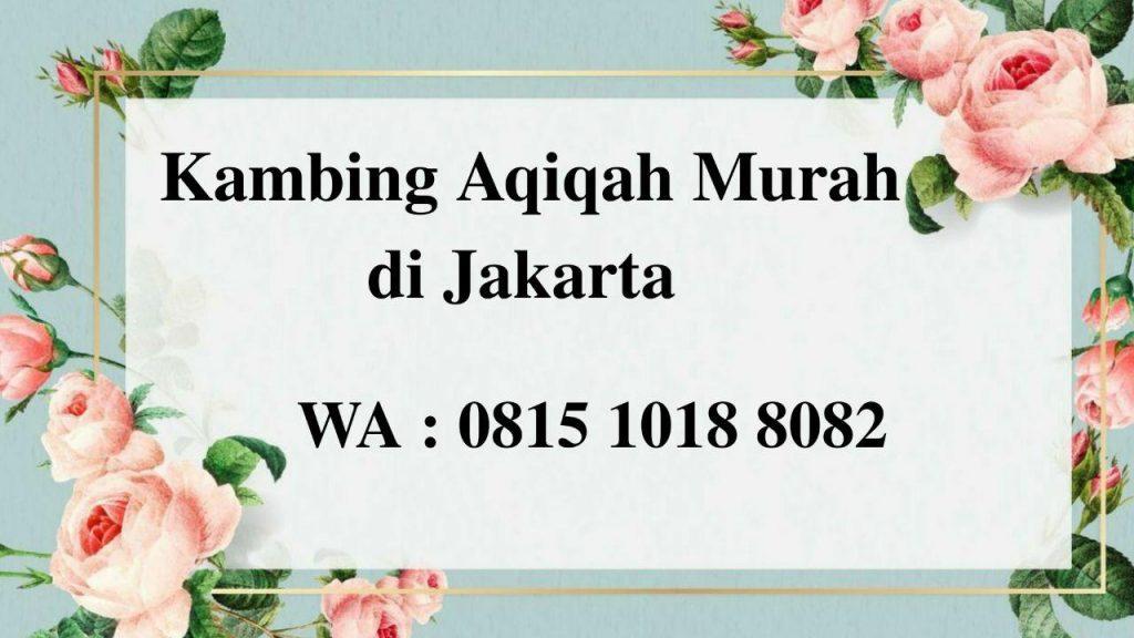 Kambing Aqiqah Murah di Jakarta