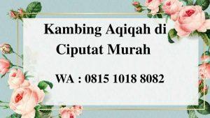 Kambing Aqiqah di Ciputat Tangerang Selatan