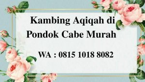 Kambing Aqiqah di Pondok Cabe Tangerang Selatan