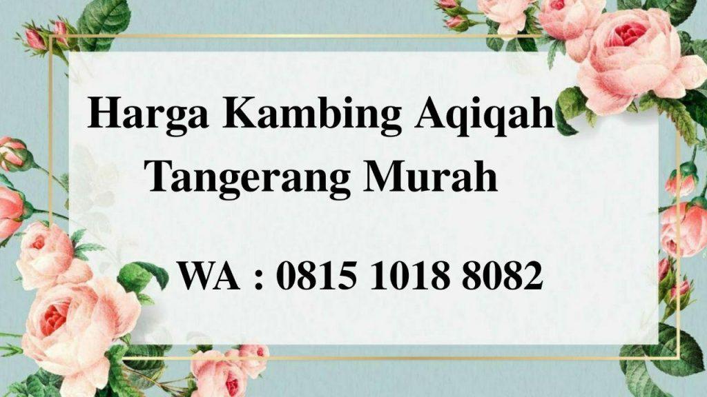 Harga Kambing Aqiqah Tangerang